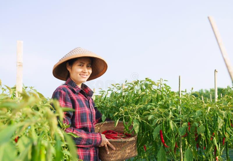 Frauenlandwirt lizenzfreies stockbild