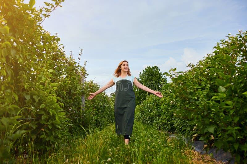 Frauenlandwirt, der im Fruchtgarten arbeitet Biologeninspektor überprüft Brombeerbüsche stockbild
