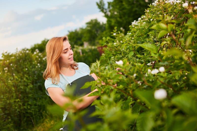 Frauenlandwirt, der im Fruchtgarten arbeitet Biologeninspektor überprüft Brombeerbüsche lizenzfreie stockbilder