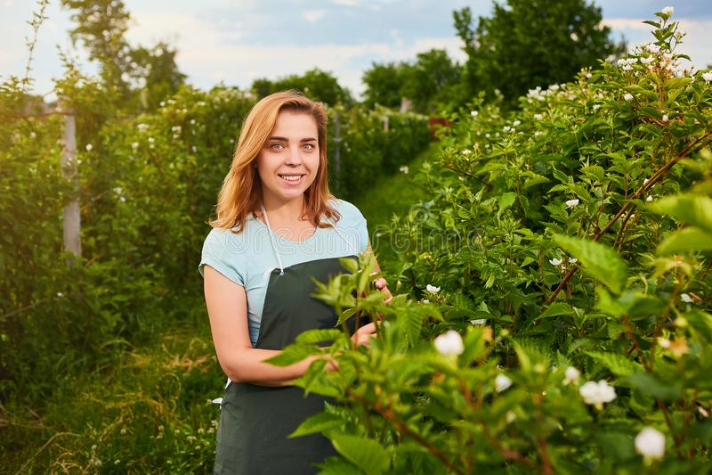 Frauenlandwirt, der im Fruchtgarten arbeitet Biologeninspektor überprüft Brombeerbüsche lizenzfreies stockfoto