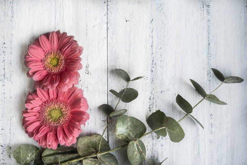 Frauentagesschablone mit Gänseblümchenblumen wie Nr. acht auf Holz lizenzfreie stockfotografie