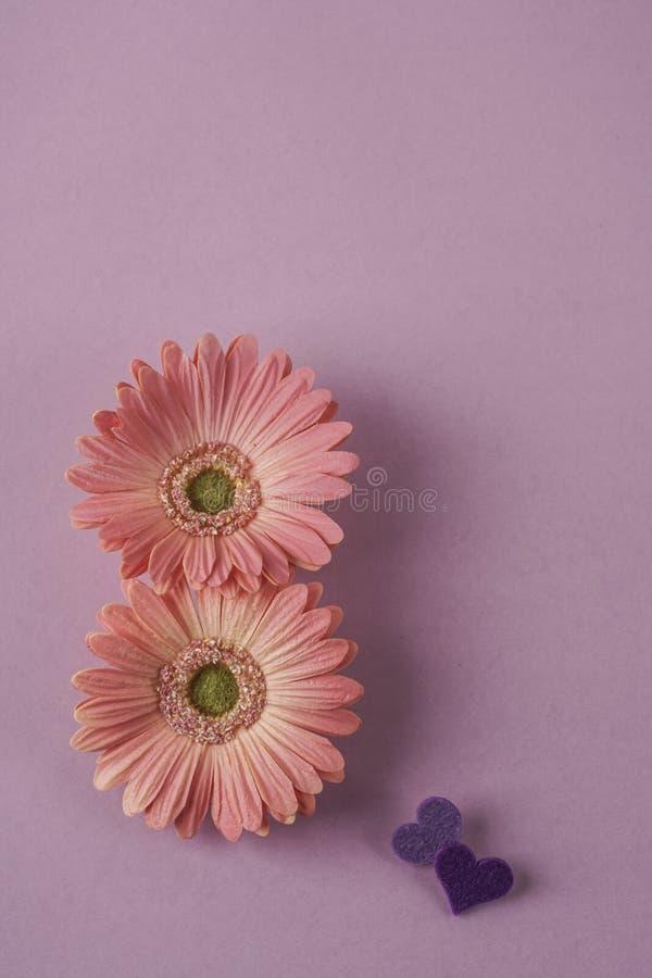 Frauentagesschablone mit G?nsebl?mchenblumen und -herzen auf Purpur stockbild