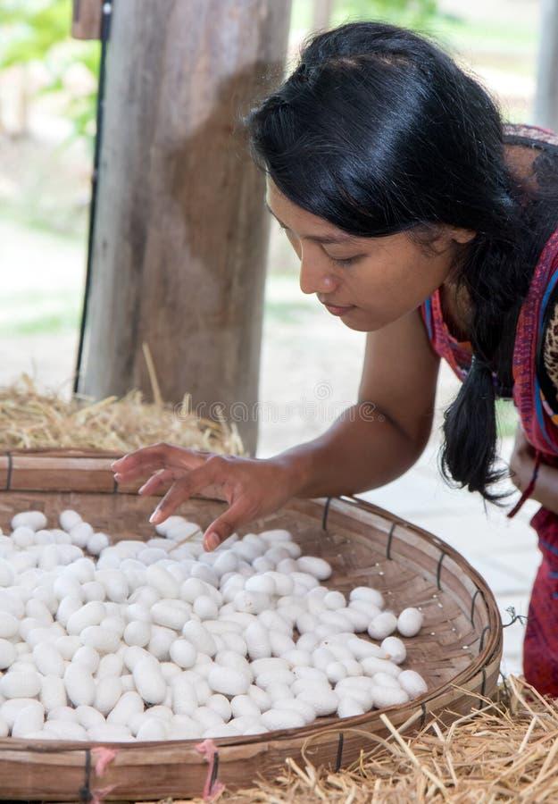 Frauenuhr an den weißen Seidenraupenkokons lizenzfreie stockfotos
