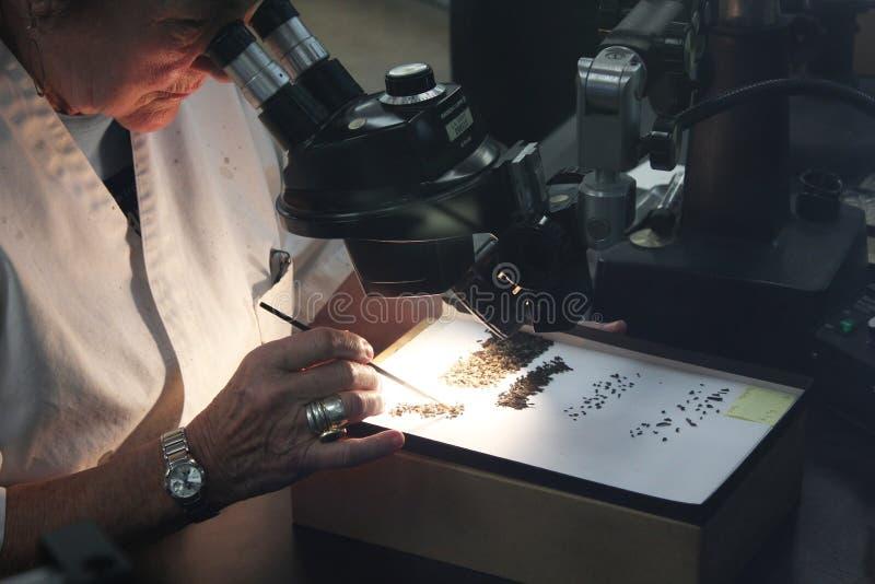 Frauenwissenschaftler, der durch Mikroskop schaut lizenzfreies stockfoto