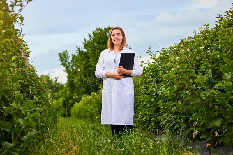 Frauenwissenschaftler, der im Fruchtgarten arbeitet Biologeninspektor überprüft Brombeerbüsche stockbild