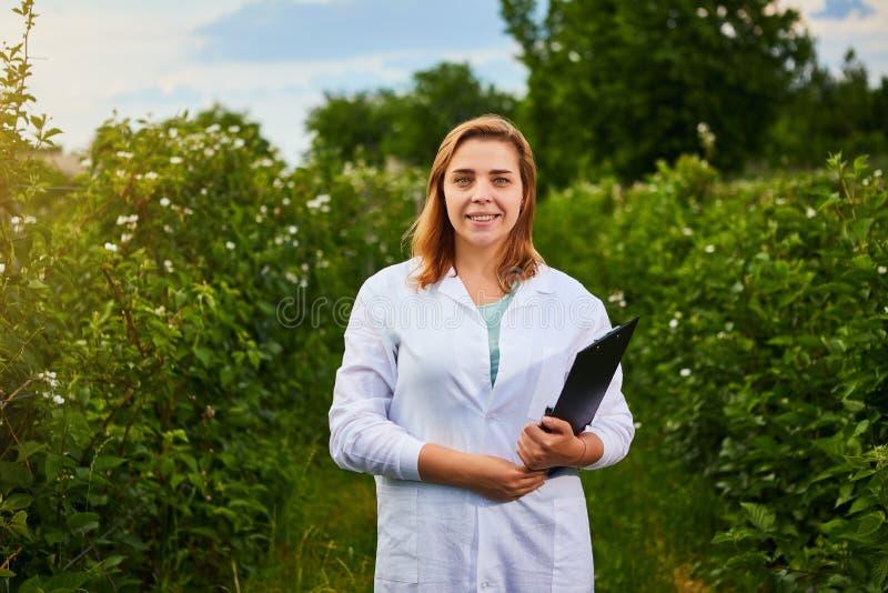 Frauenwissenschaftler, der im Fruchtgarten arbeitet Biologeninspektor überprüft Brombeerbüsche lizenzfreies stockfoto