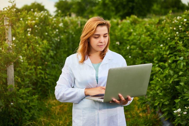 Frauenwissenschaftler, der im Fruchtgarten arbeitet Biologeninspektor überprüft Brombeerbüsche unter Verwendung des Laptops stockfotografie