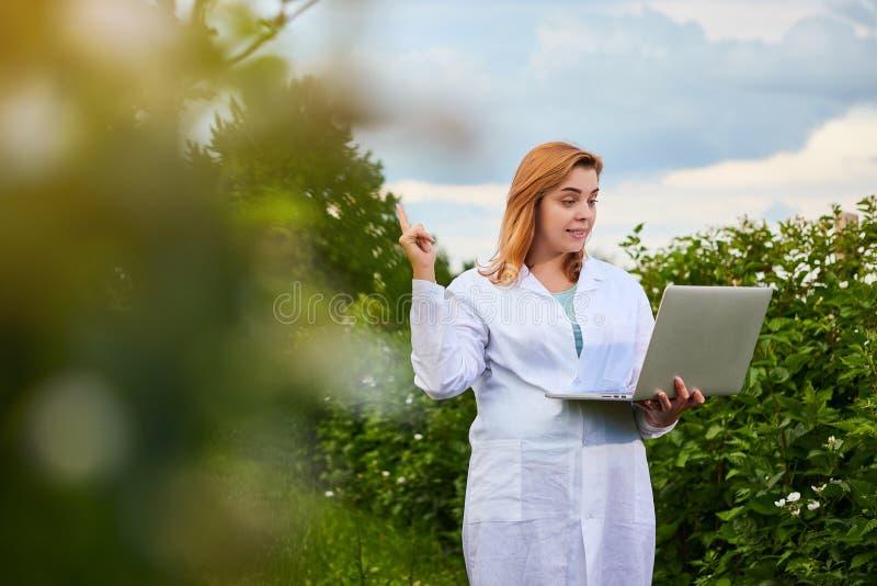 Frauenwissenschaftler, der im Fruchtgarten arbeitet Biologeninspektor überprüft Brombeerbüsche unter Verwendung des Laptops lizenzfreie stockfotografie
