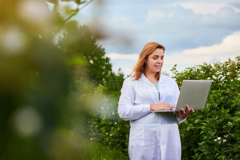 Frauenwissenschaftler, der im Fruchtgarten arbeitet Biologeninspektor überprüft Brombeerbüsche unter Verwendung des Laptops stockfoto