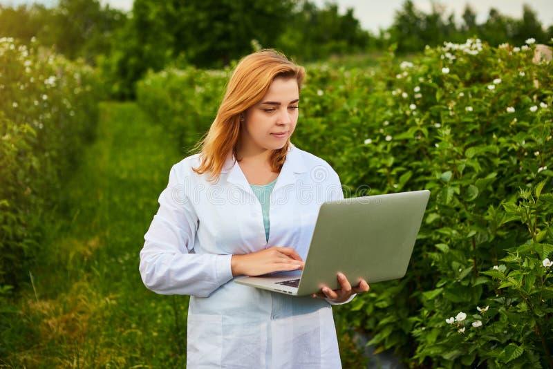 Frauenwissenschaftler, der im Fruchtgarten arbeitet Biologeninspektor überprüft Brombeerbüsche unter Verwendung des Laptops lizenzfreie stockfotos