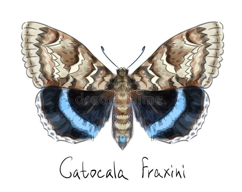 fraxini catocala бабочки иллюстрация вектора