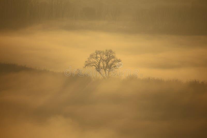 Fraxinusträd i landskapet royaltyfria foton