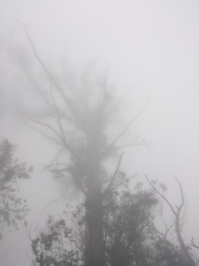 A Freaky Tree stock images