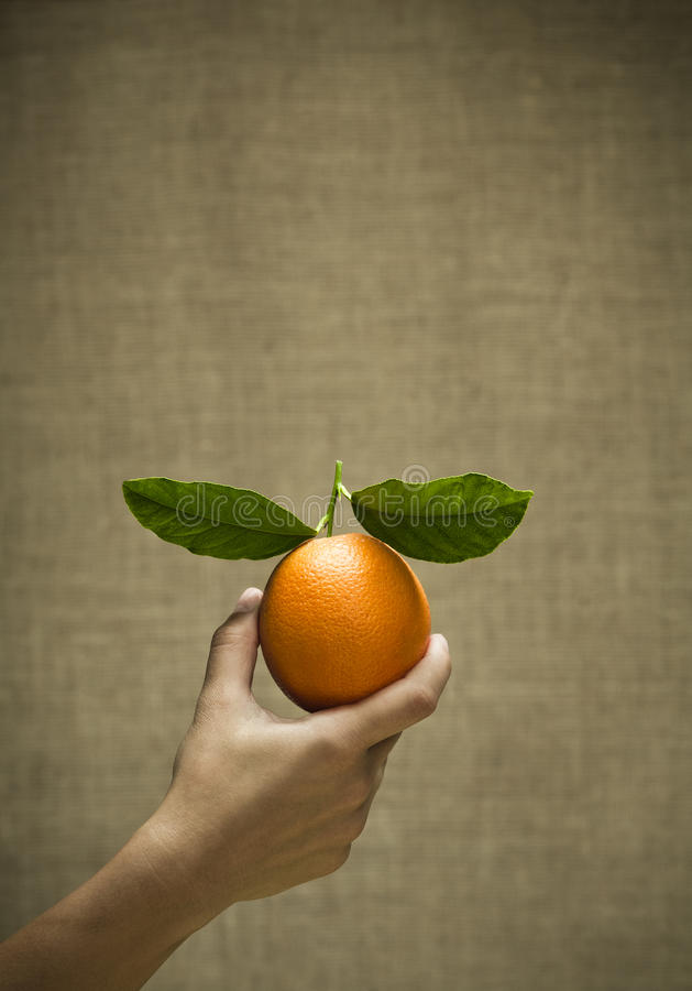 Download Freash Natural Orange With Leaves Stock Photo - Image: 19619938