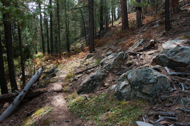 Fred Haught Trail #141 royalty free stock images