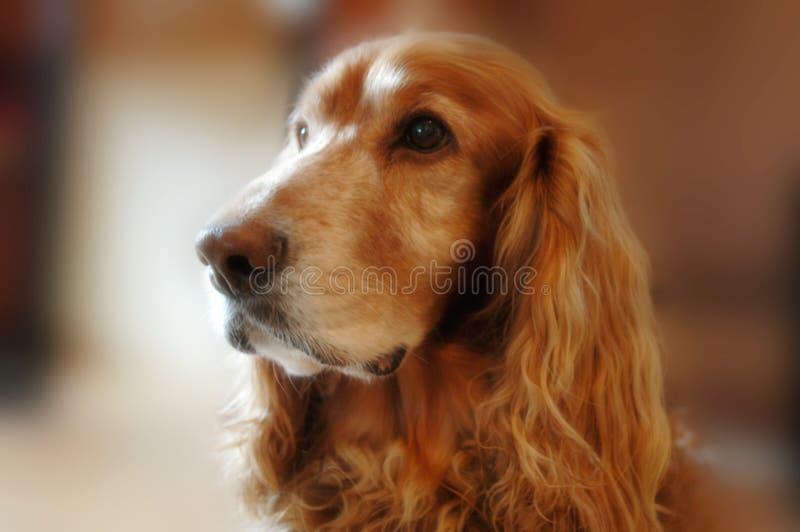 Freddie, lovely dog stock image