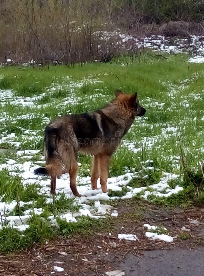 Freddo dell'erba di inverno della neve del cane immagini stock