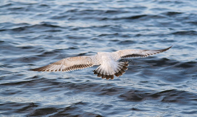 Download Free as a Bird stock image. Image of photo, free, photograph - 6962649