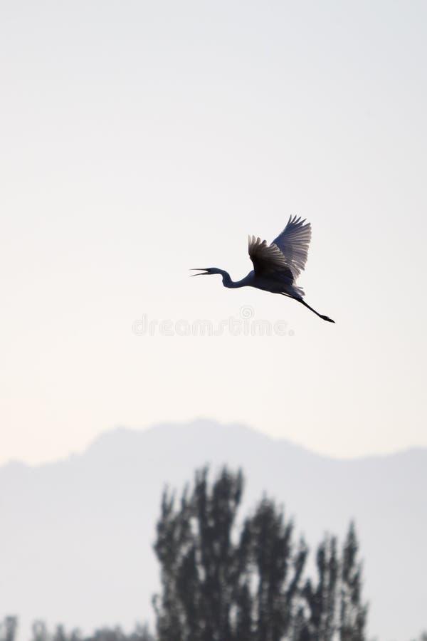 free bird royalty free stock images