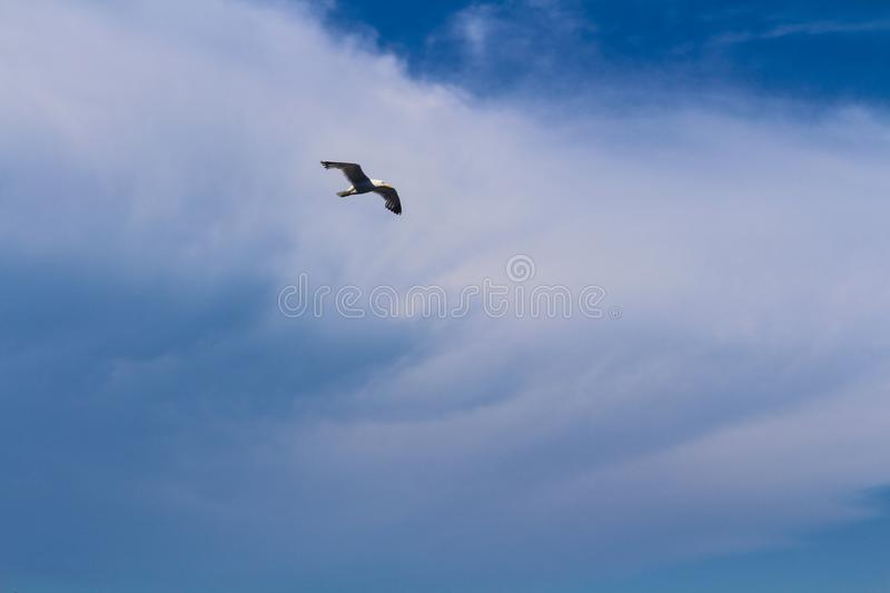 Feel the freeedom of bird royalty free stock photo