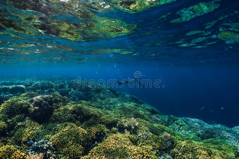 Free diver dive in ocean, underwater view with rock stock images