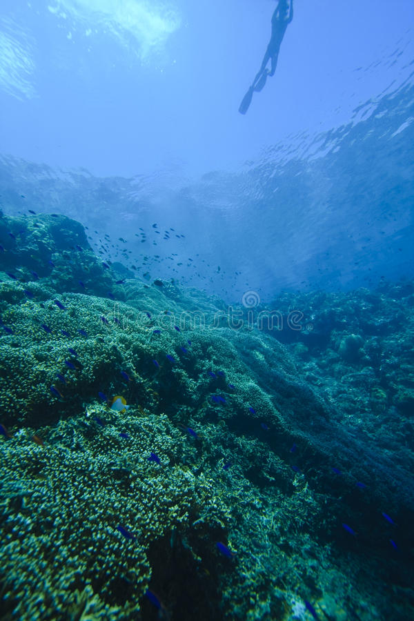 Free Divers Stock Photography