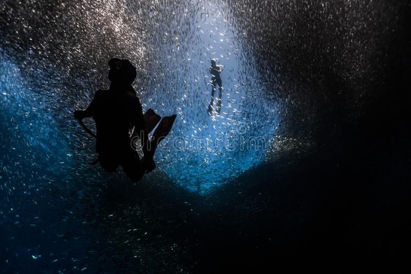 Free diving into the deep with a massive school of fish royalty free stock image