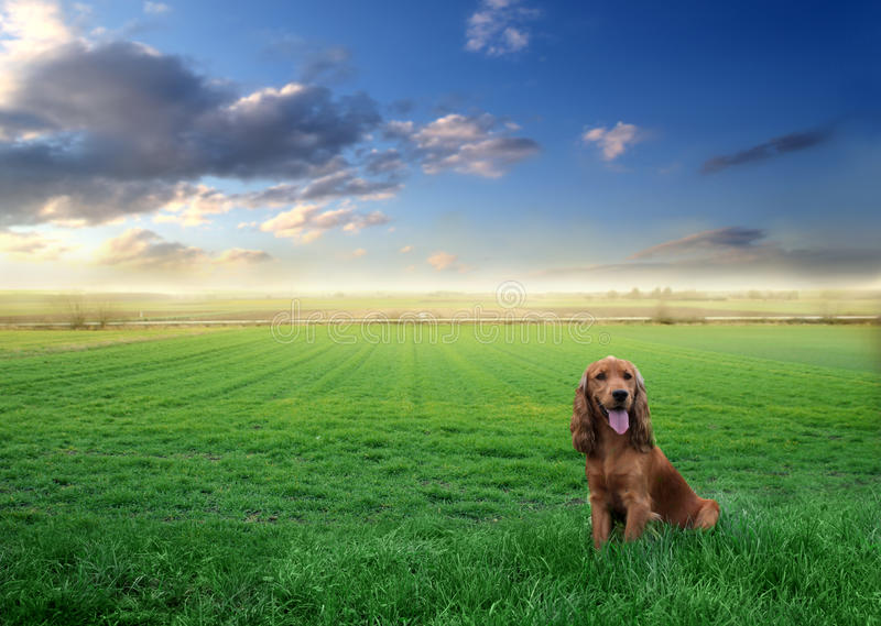 Download Free dog stock image. Image of horizon, countryside, lawn - 12743475