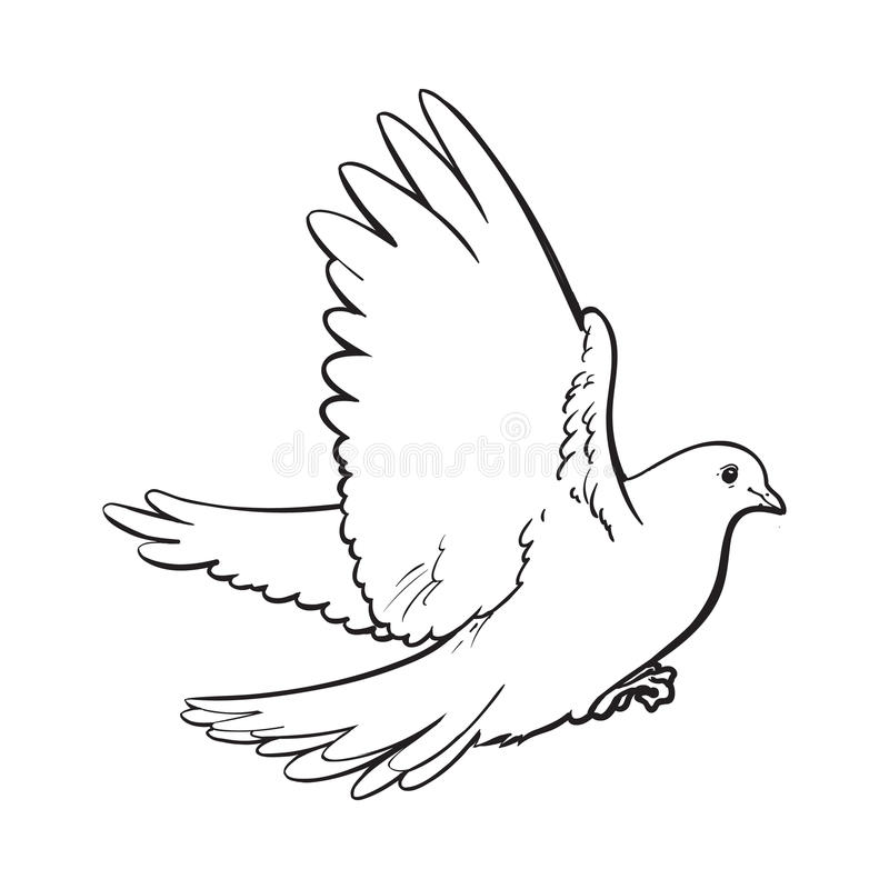 It's just an image of Resource Realistic Dove Drawing
