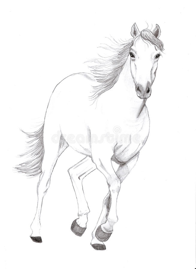 Download Free horse stock illustration. Illustration of bright - 11571523