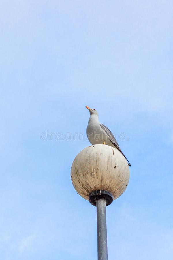 A free-loving wild bird against the blue sky. Sea gull against the sky. Bird on the lantern. Seabird plumage. Photogenic gull. Summer sky landscape. Sights of royalty free stock photography