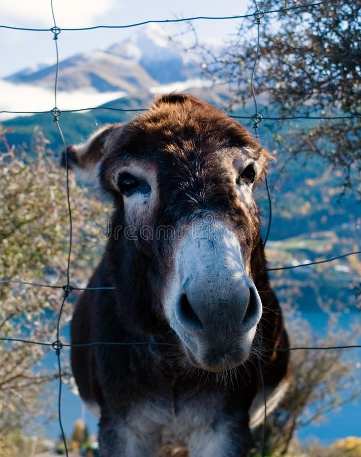 Free me donkey stock photography