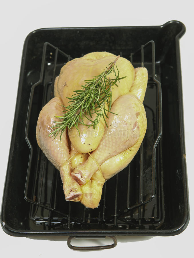 Free range chicken with rosemary stock photo