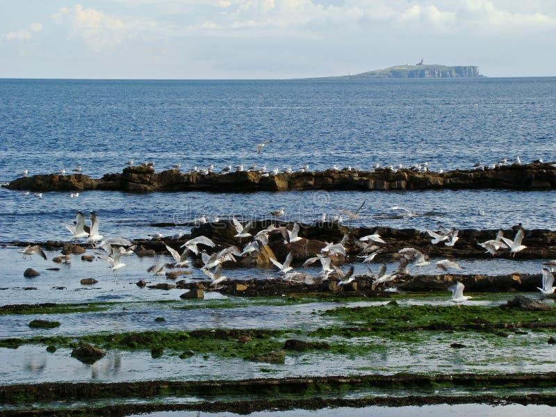 Free seagulls royalty free stock photo