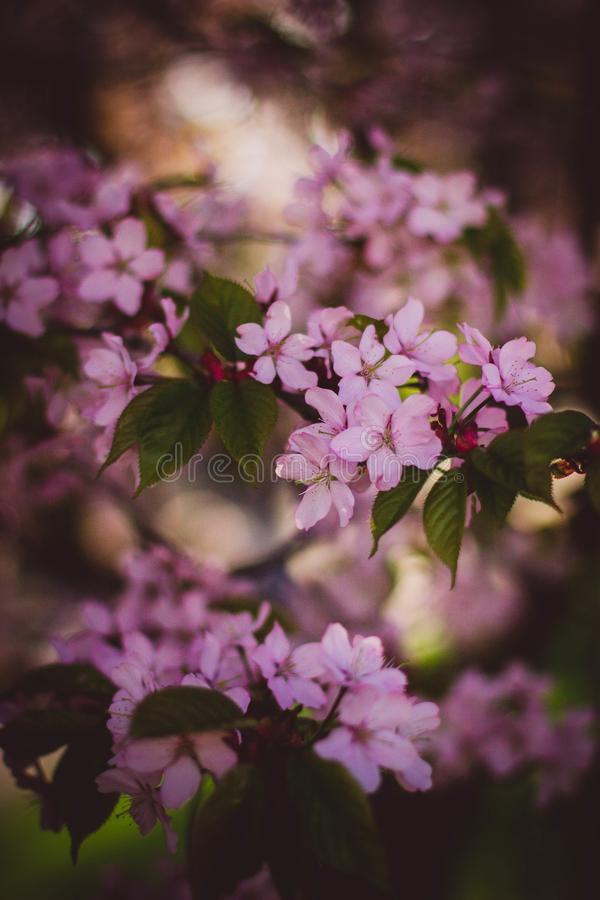Free Stock Photo Of Beautiful, Bloom, Blooming, Blossom Free Public Domain Cc0 Image