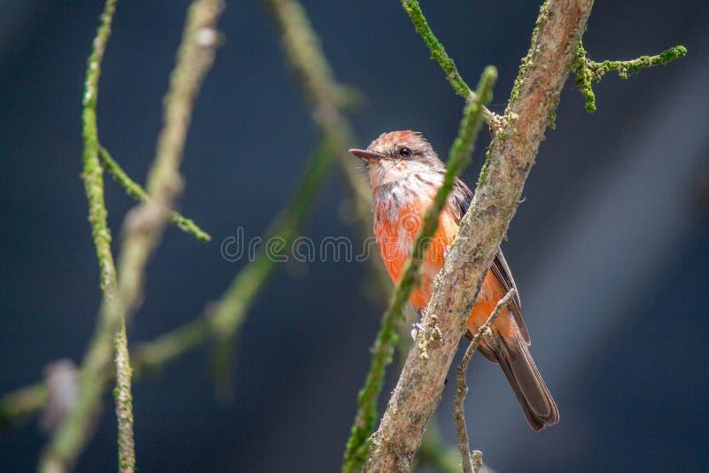 Free Stock Photo Of Bird, Beak, Fauna, Wildlife Free Public Domain Cc0 Image