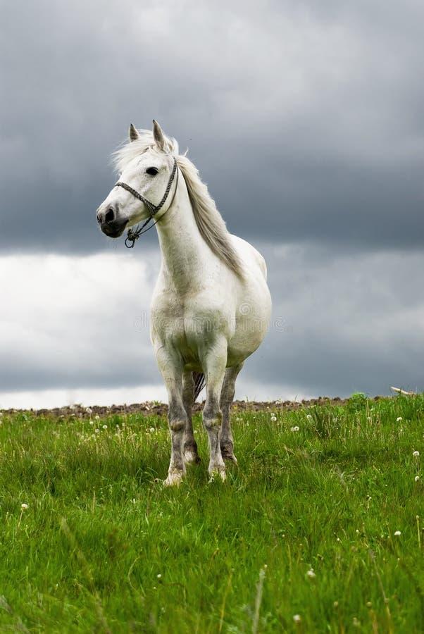 Free white horse stock photos