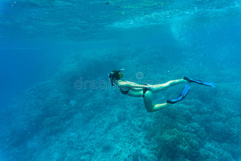 Free woman diver gliding snorkeling underwater over vivid coral reef in a tropical sea royalty free stock photo