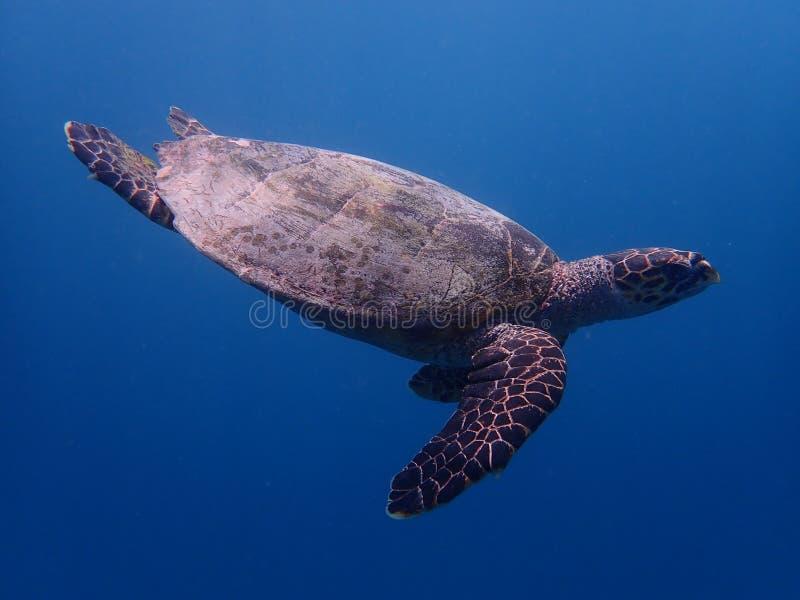 Freedive images stock