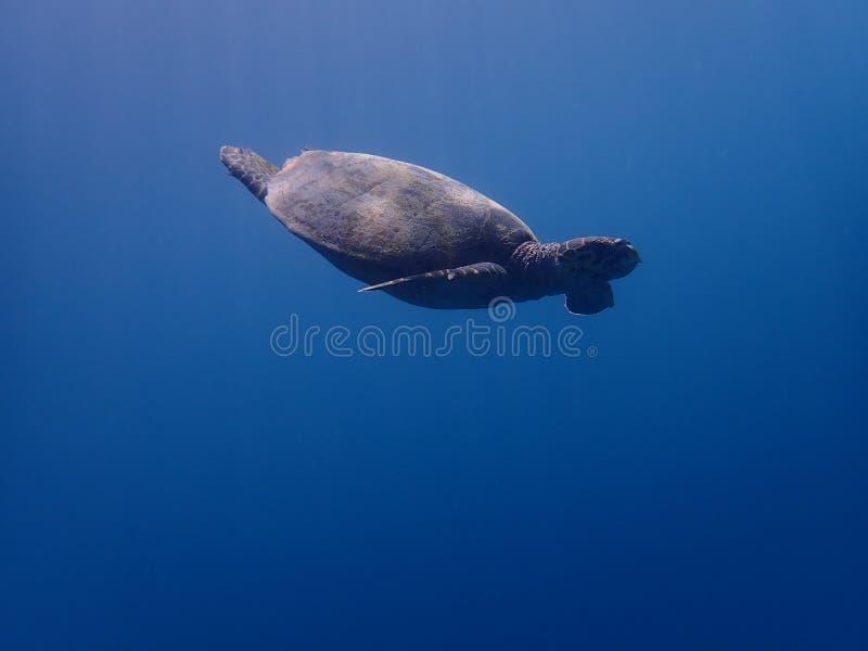 Freedive photo libre de droits
