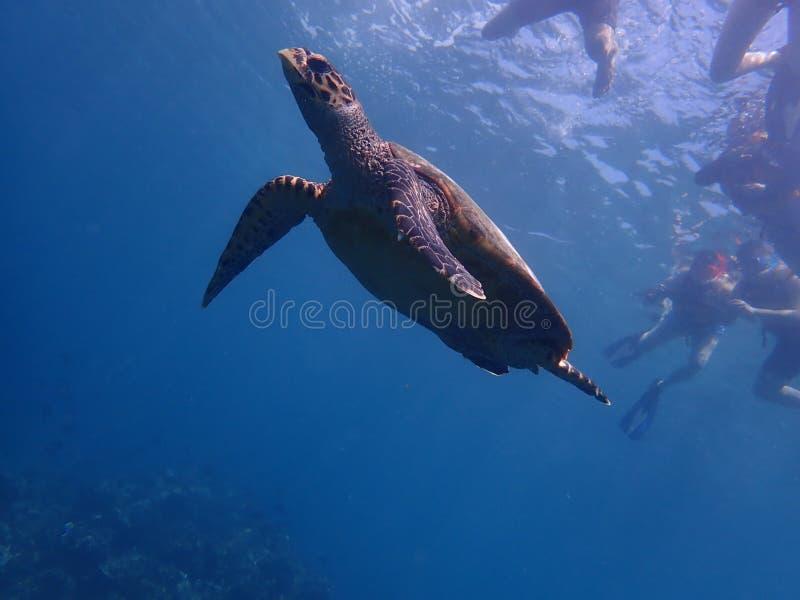 Freedive photographie stock libre de droits