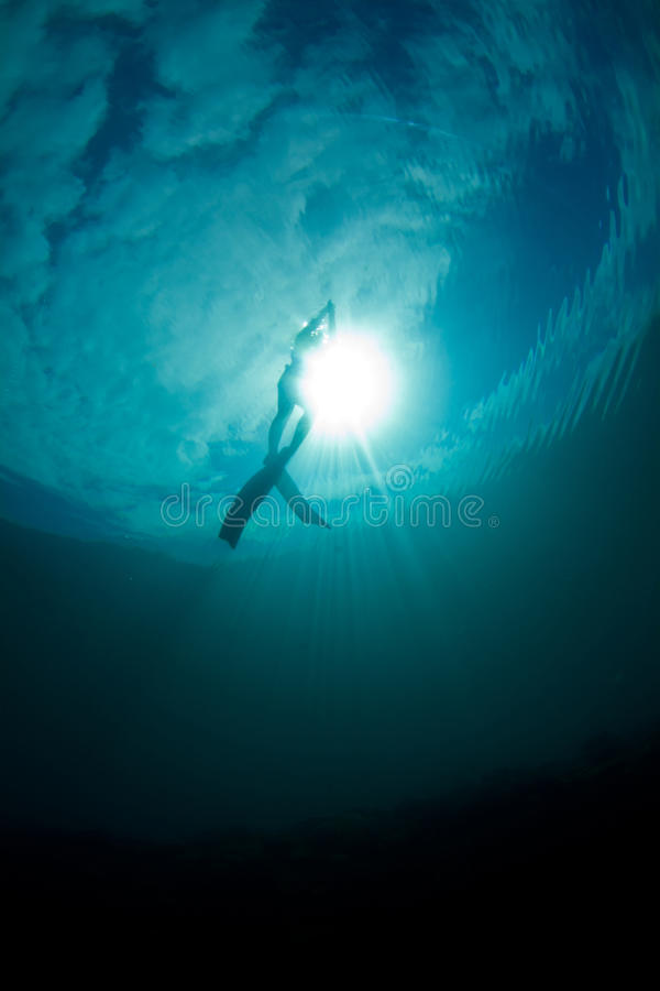 Download Freedive ascent stock photo. Image of tropical, great - 18324722