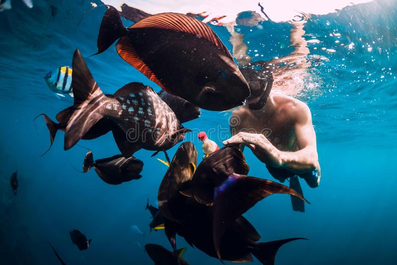 Freediver人游泳和鱼哺养的学校在海 库存图片