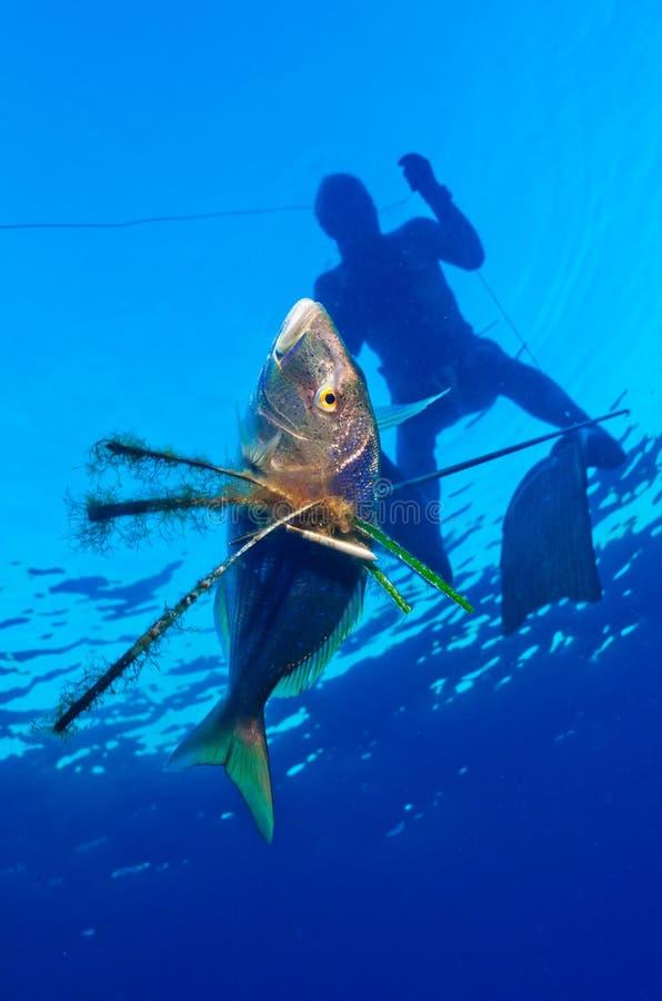 Freediver стоковое изображение