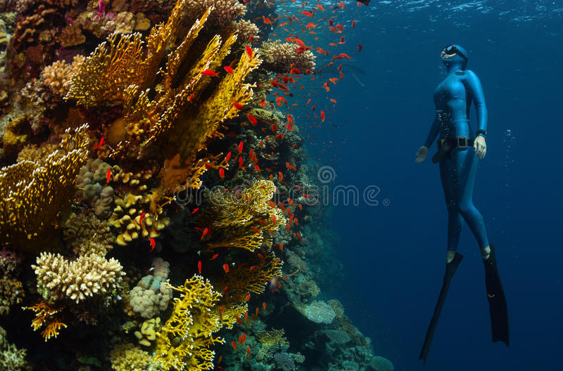 Freediver stock foto's