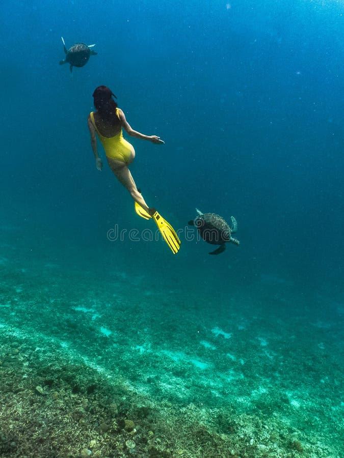 Freediver kvinna med hawksbillsköldpaddan, undervattens- fotografi royaltyfri fotografi