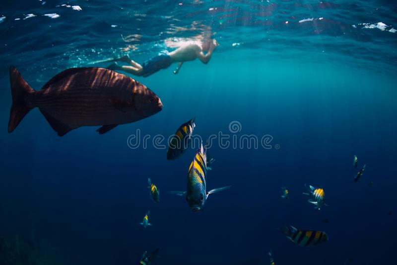 Freediver man swimming with tropical fish in ocean royalty free stock photos