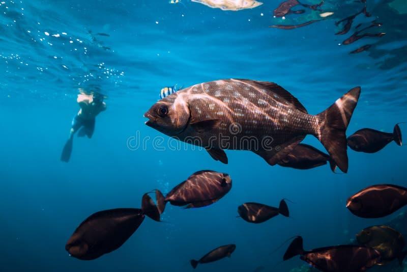 Freediver-Mannschwimmen mit tropischen Fischen im Meer lizenzfreie stockfotos