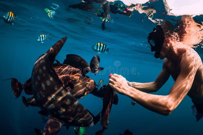 Freediver-Mannschwimmen und Fütterungsfischschwarm im Meer stockbild