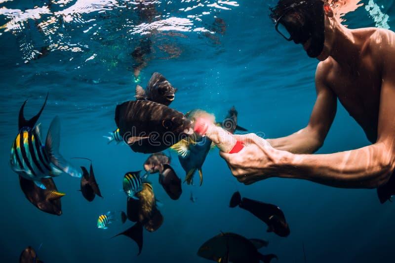 Freediver-Mannschwimmen und Fütterungsfischschwarm im Meer lizenzfreie stockfotografie
